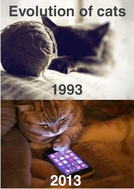 Evolution of cats - appPicker