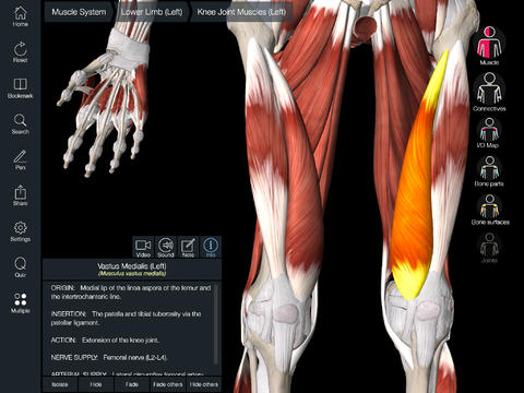 Essential Muscle Skeleton Anatomy App Apppicker