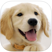 DOGS wallpaper HD + Only the best DOGS wallpapers app review